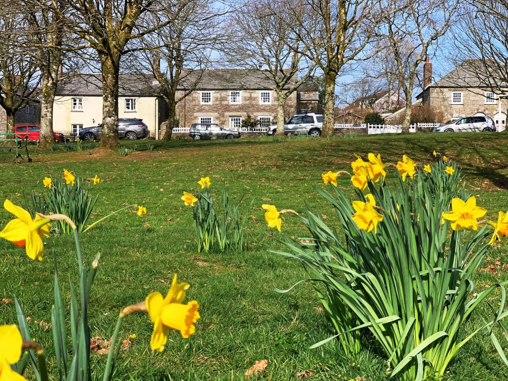 View of the Village Green at Blisland with daffodils, Bodmin Moor, Cornwall