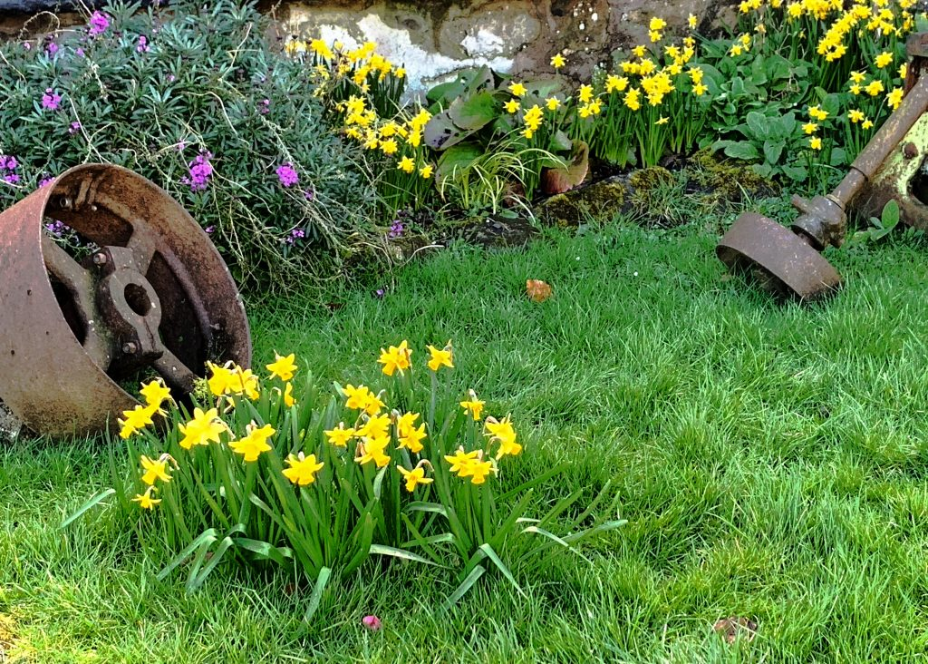 Spring Flowers in the small front garden at Finch Foundry, in the village of Sticklepath on Dartmoor, Devon