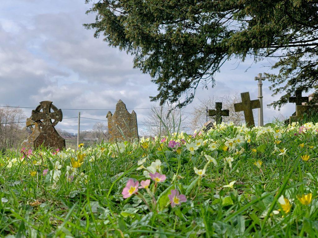 Spring flowers in the churchyard at St. Andrew's, Kenn, Devon