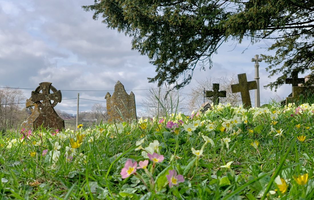 Spring flowers in the churchyard at St. Andrew's, Kenn, Devon