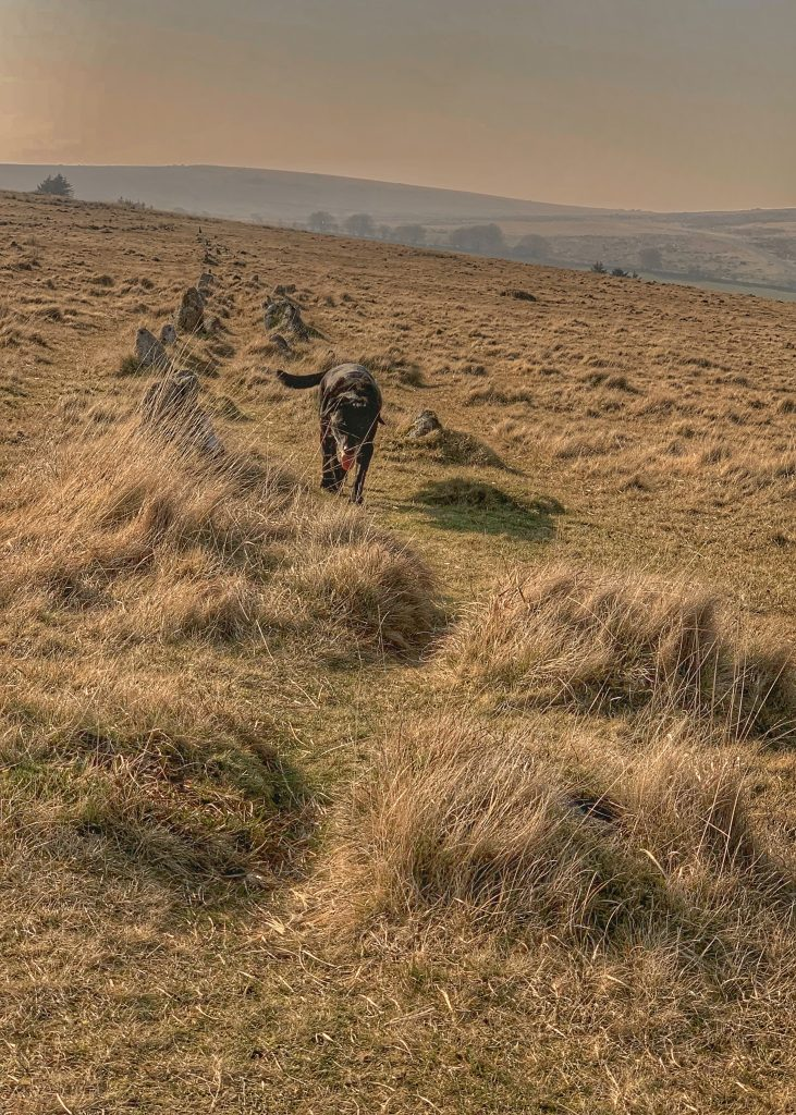 Stone row at the prehistoric settlement of Merrivale, near Princetown on Dartmoor, Devon