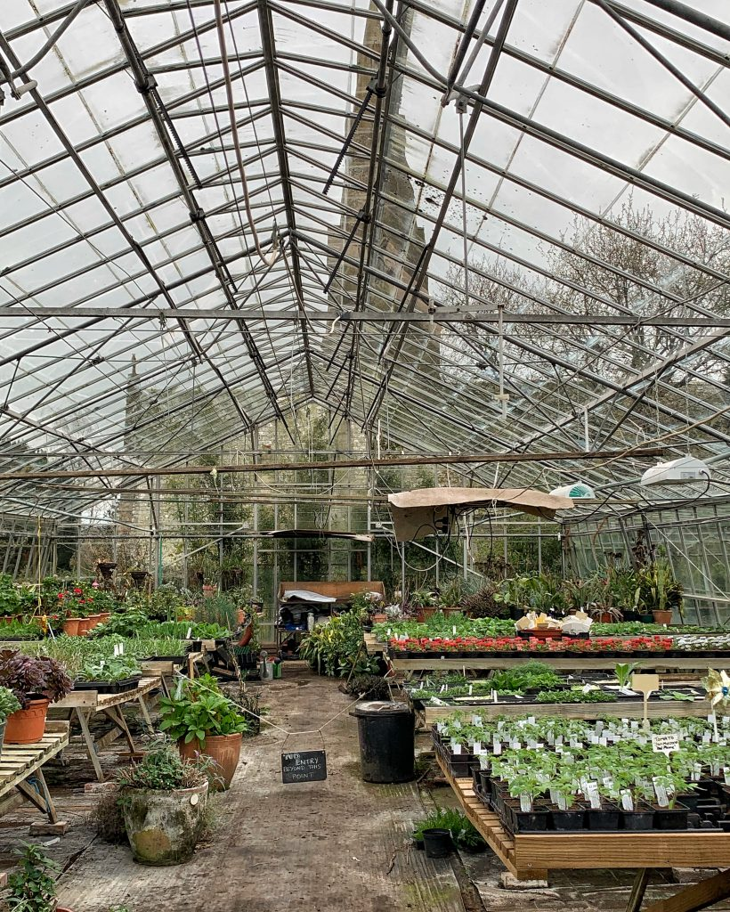Interior of Greenhouse at Hill House Nursery, Landscove, Devon