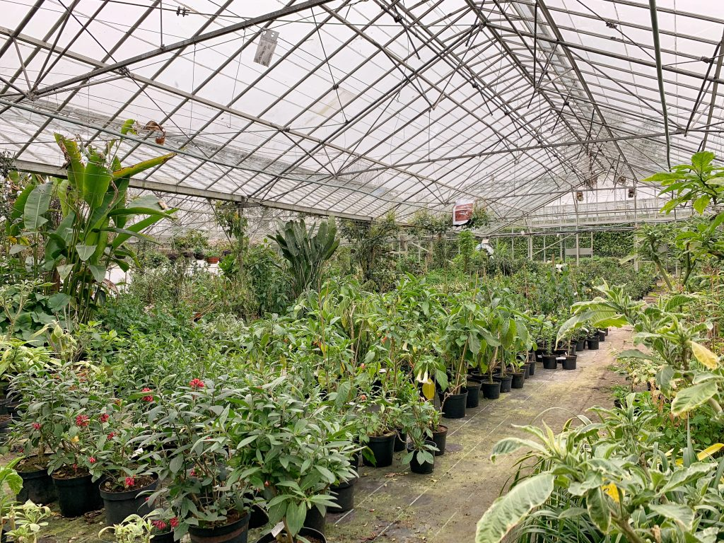 Interior of Greenhouse at Hill House, Landscove, Devon