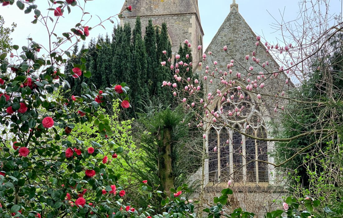 View of St. Matthew's Church from the Garden at Hill House Nursery at Landscove, Devon