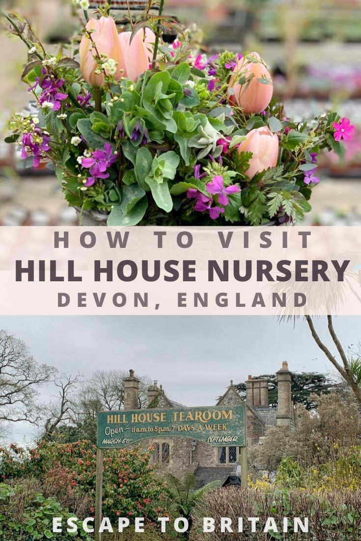 Guide to Visiting Hill House Nursery in Landscove - A traditional family-run Nursery with a Tearoom in the heart of Devon South West England