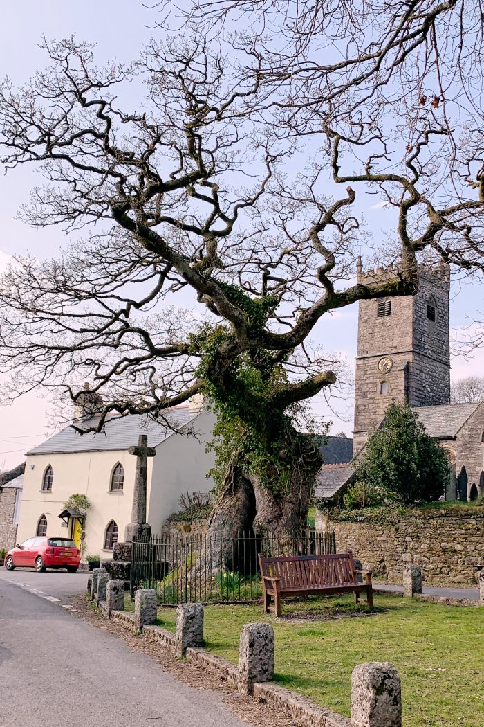 Meavy: Home to an ancient Royal Oak planted during King John's reign