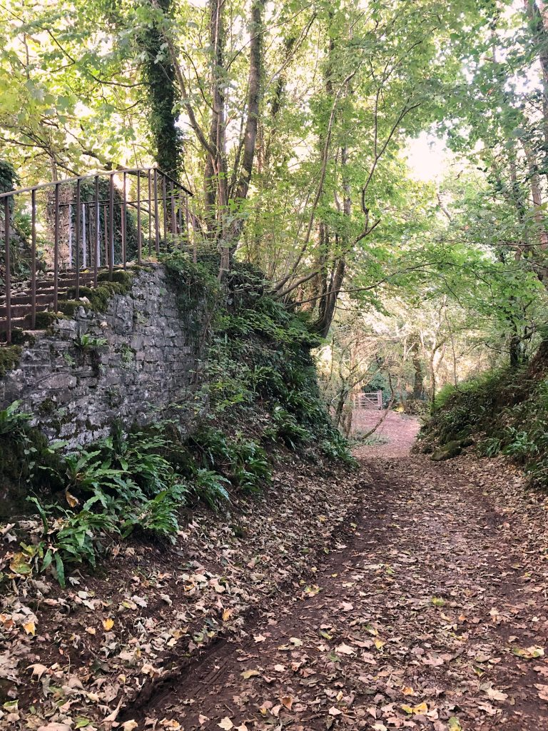 Wooded Track and steps up to the church at Buckfastleigh in Devon