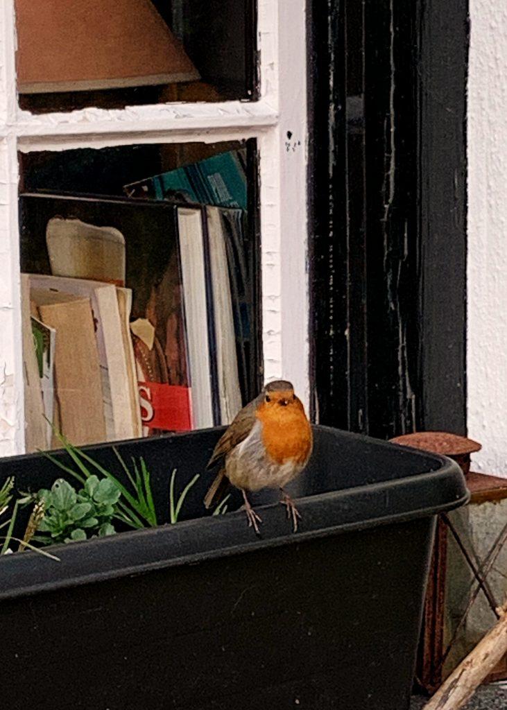 Robin on a window-box