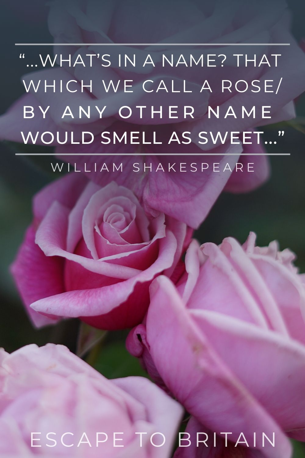 """...What's in a name? That which we call a rose/ By any other name would smell as sweet..."" william shakespeare quote: rose quotes you'll love"