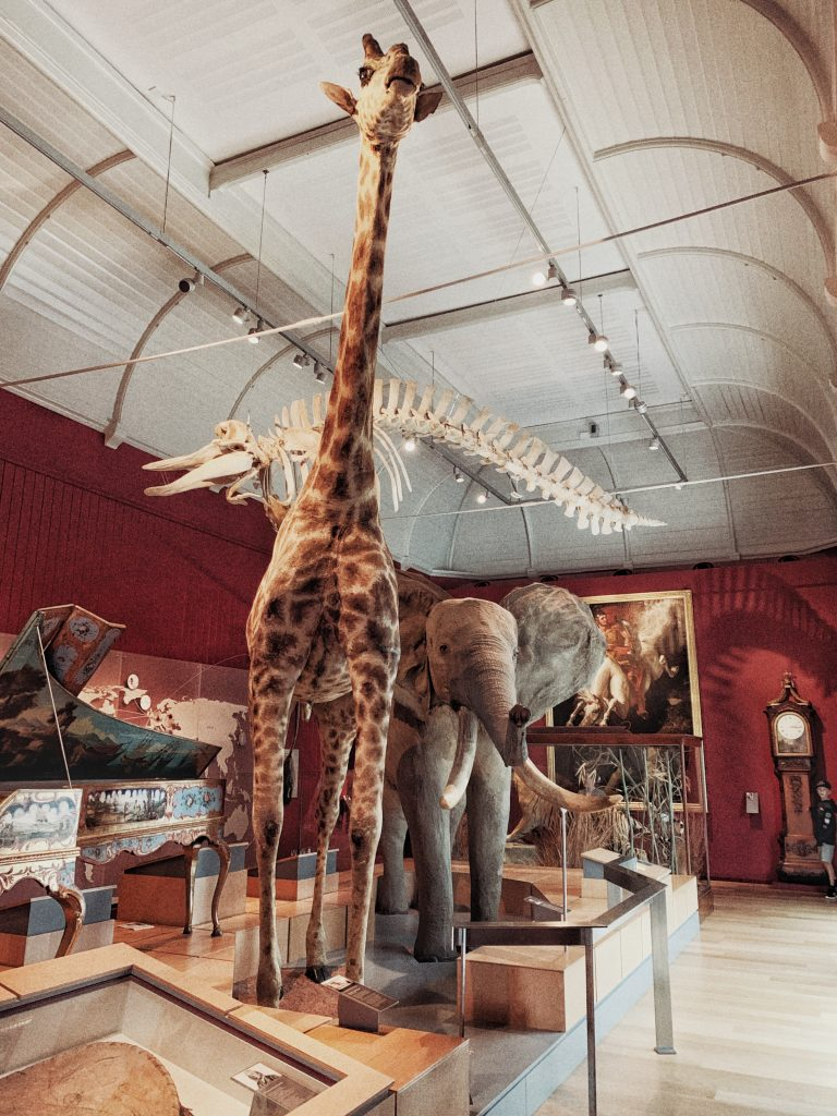 Visit the RAMM Museum