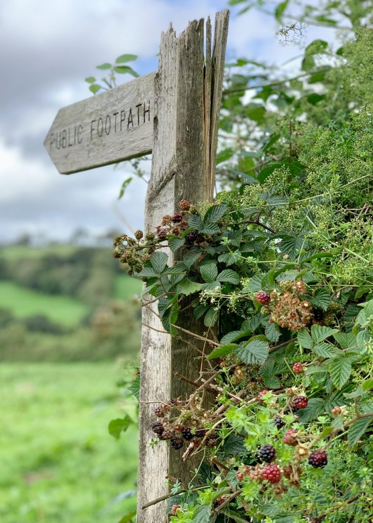 Footpath sign with Blackberries